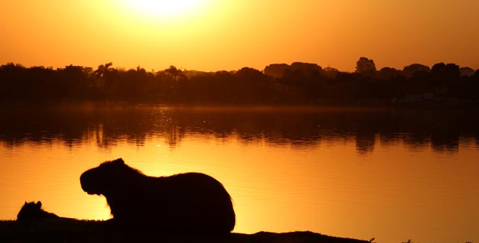 UFMS Além dos Olhos: Capivaras ao pôr do sol - Mato Grosso do Sul em relance - Lucas Gazarini